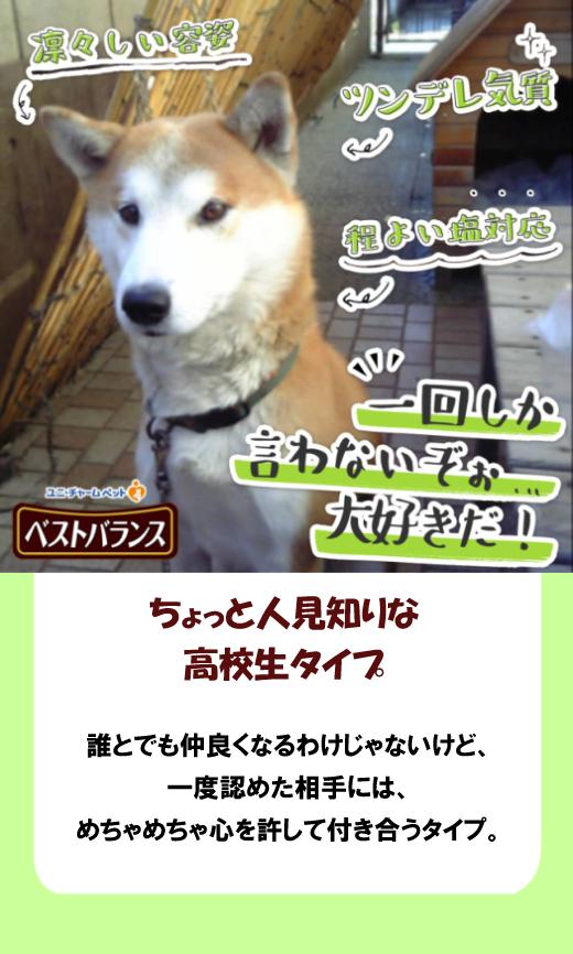 seikaku_shindan-singo.jpg